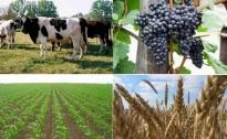 Javni poziv – Sufinanciranje samozapošljavanja i zapošljavanja u poljoprivredi