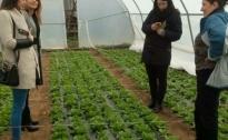 Kontrolne posjete proizvođačima salate  u Gradu Doboj